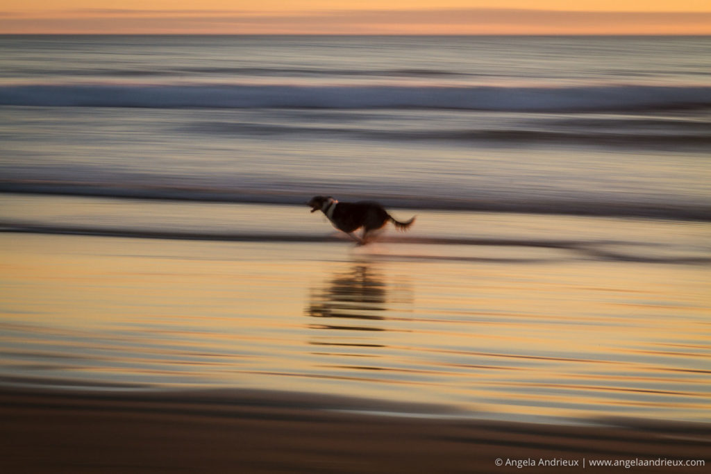 Pan blur of dog running on the beach at sunset