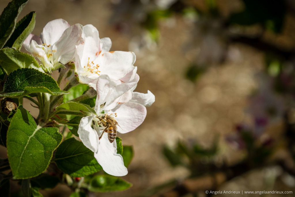 Spring Flowers | First impressions with the Canon 24-105 f/4 Lens
