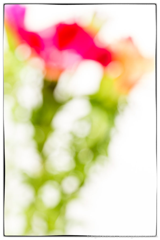 Godetia Flower Bouquet | Impressionistic Photography