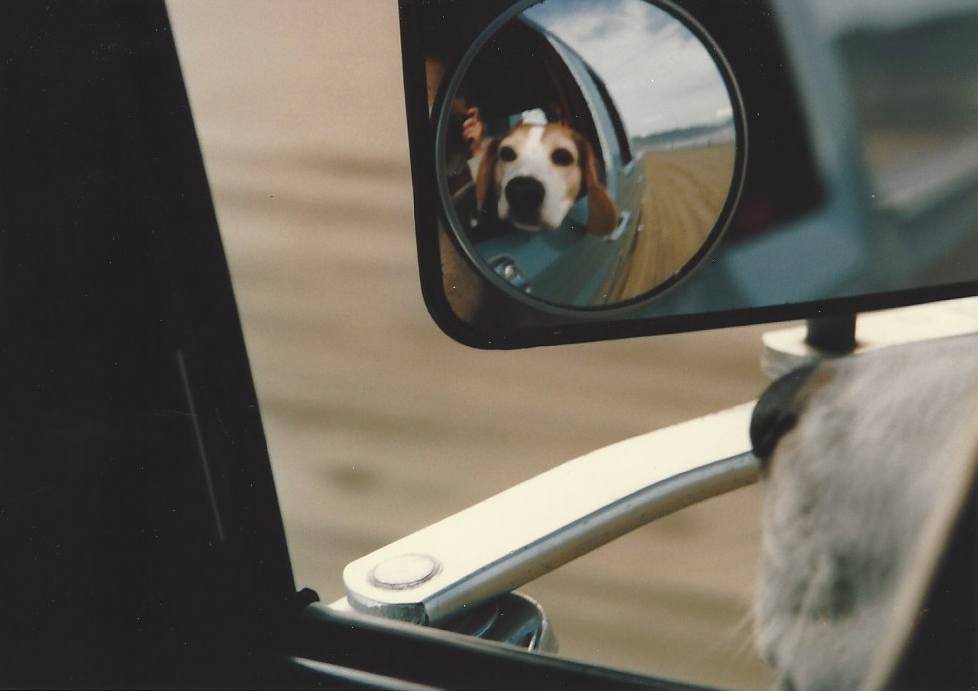 Jon Luc Picard   Beagle Car Mirror Reflection