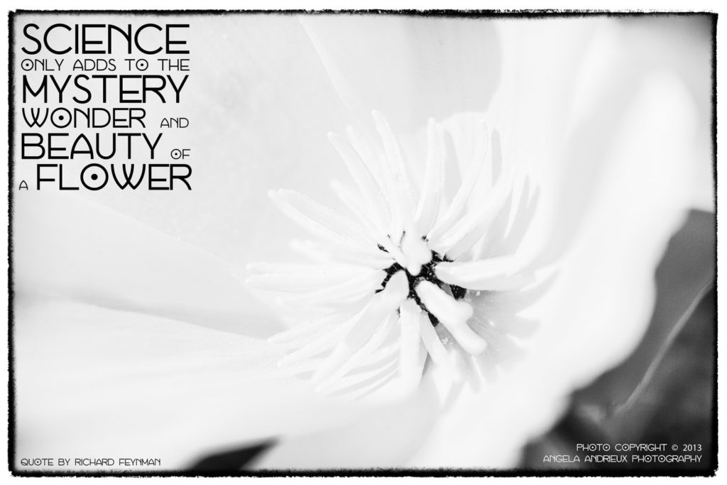 black and white flower macro with quote