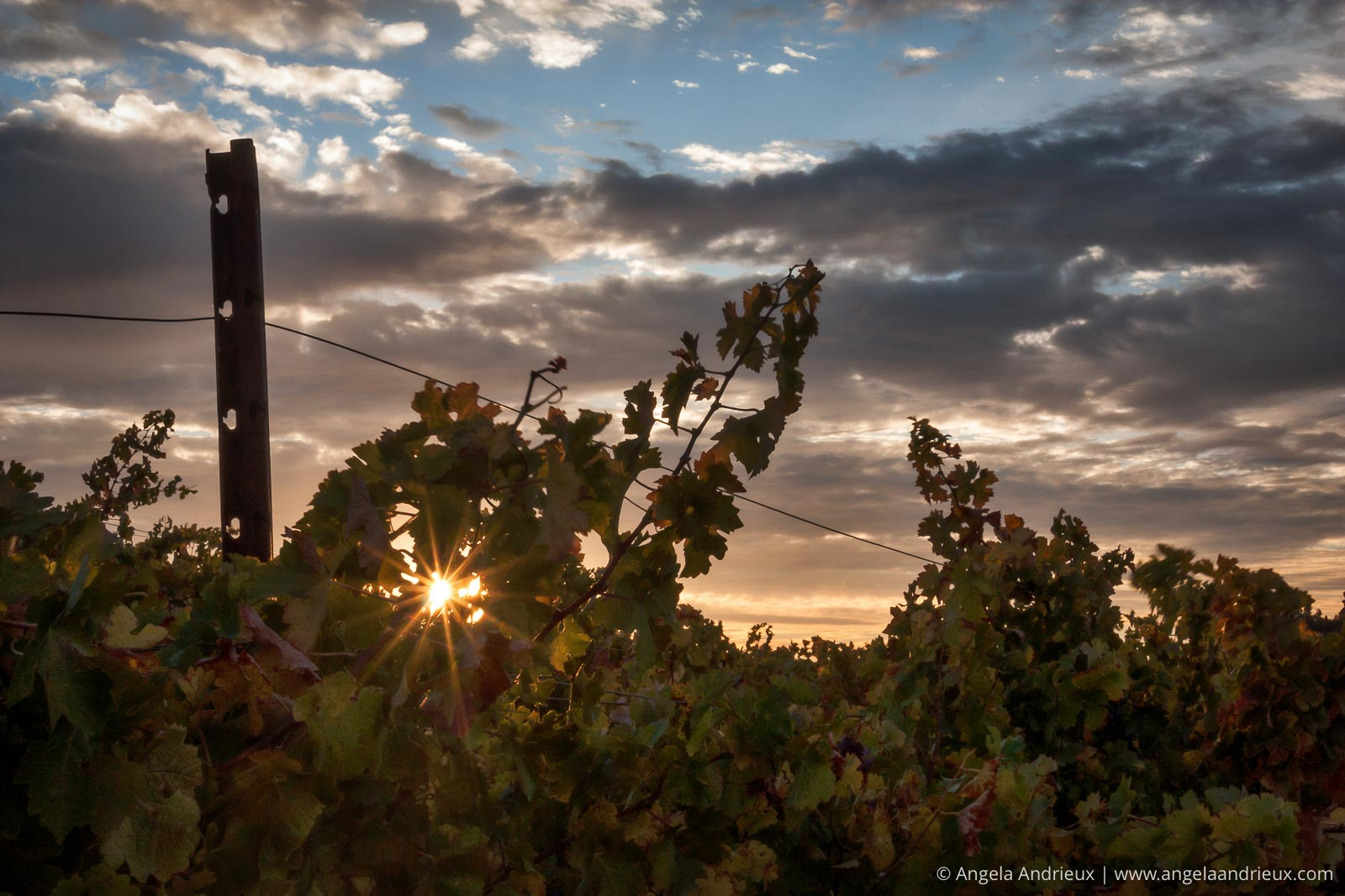 Vineyard Sunrise | Red Soles Winery | Paso Robles, CA