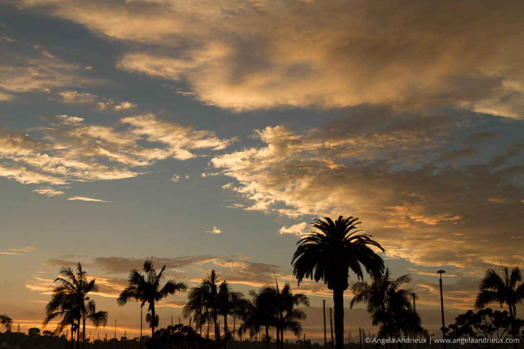 San Diego sunset with clouds and palm trees