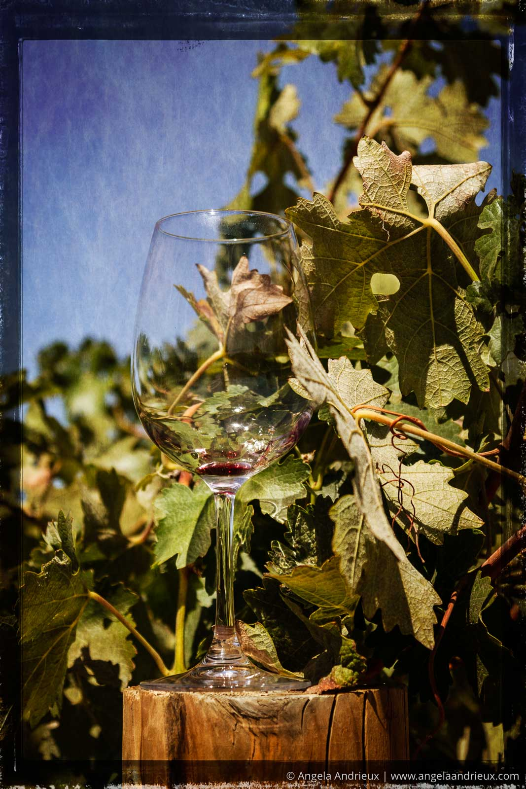 Wine glass and vineyards