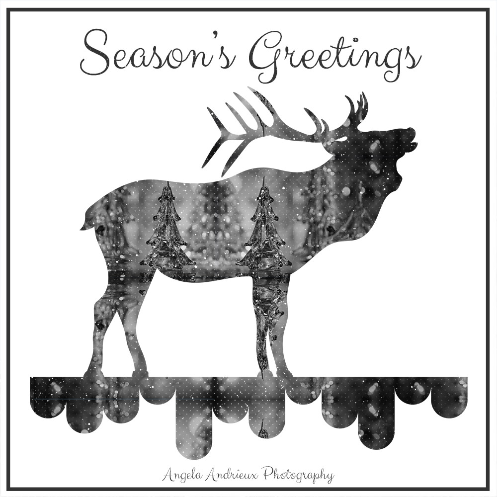 Season's Greetings from Angela Andrieux Photography