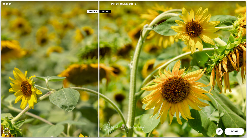 Before and After Photolemur 3