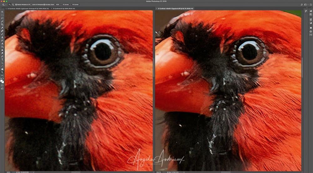 500% Zoom vs Topaz A.I. Gigapixel