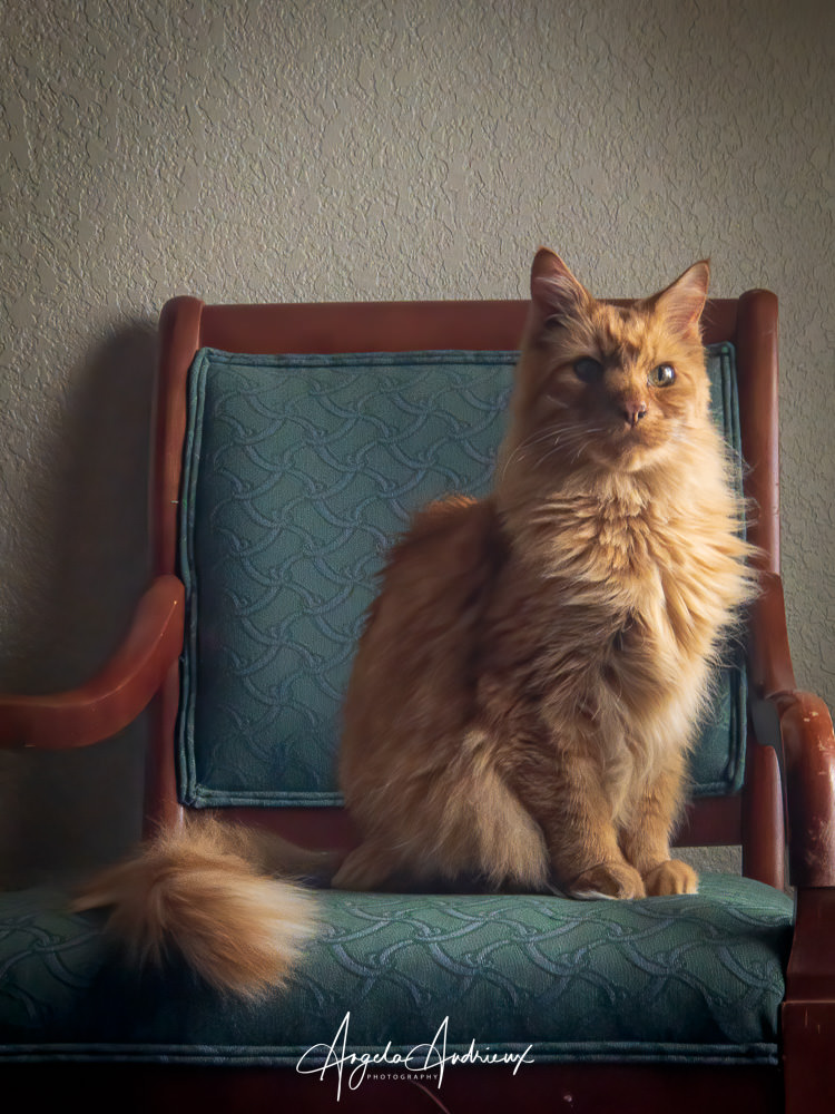 My cat, Pumpkin, Looking Regal