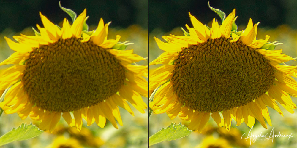 Before (left) and After (right) Topaz Sharpen AI using the Focus Mode