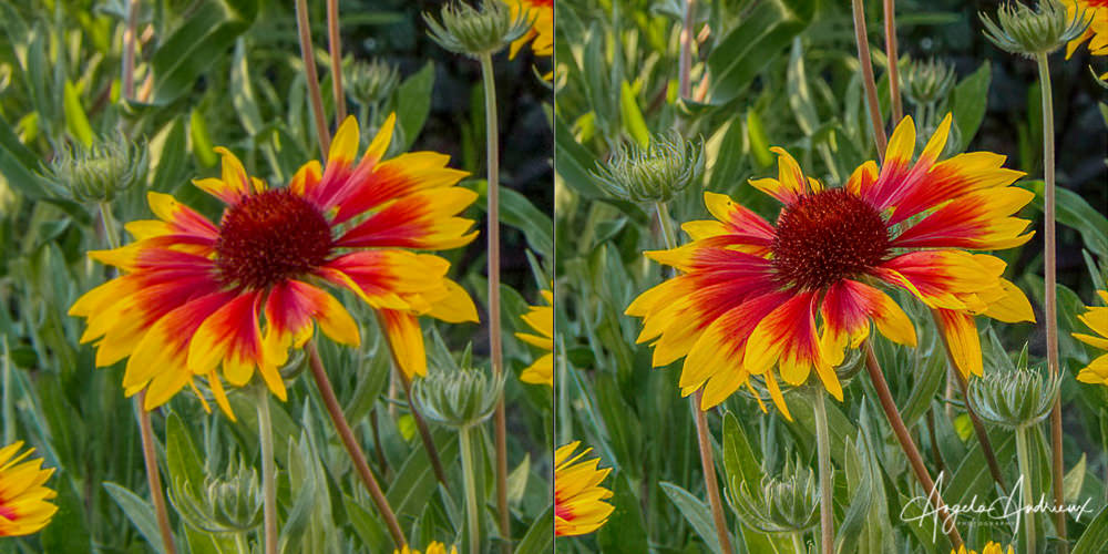Before (left) and After (right) Topaz Sharpen AI using the Sharpen Mode