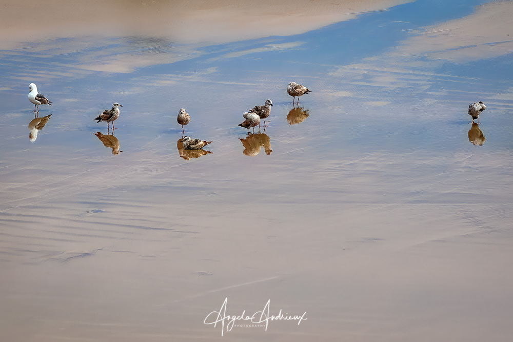 Seagulls and Reflections on the beach in Pismo Beach | California
