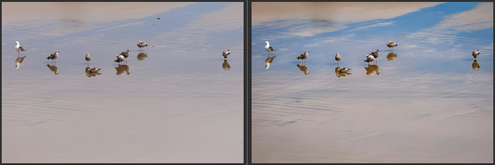 Seagulls and Reflections on the Beach in Pismo Beach California | Before and After Topaz Adjust AI