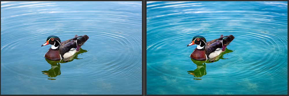 Wood Ducks at Santee Lakes Before and After Topaz Adjust AI