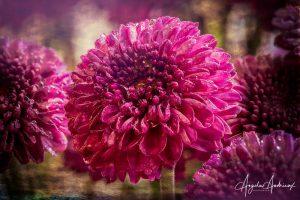 Purple Flower Macro after Topaz Studio 2