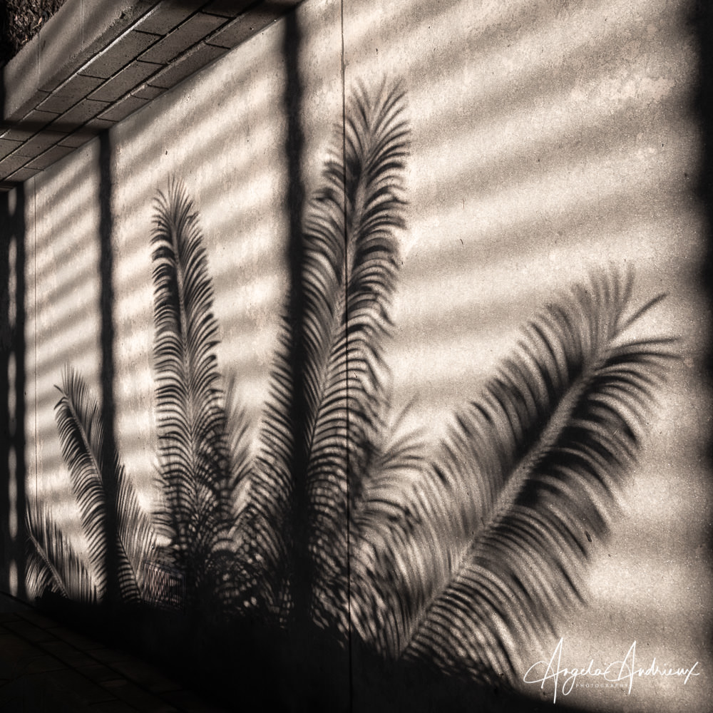 Palm Shadows in the Botanical Building in Balboa Park, San Diego