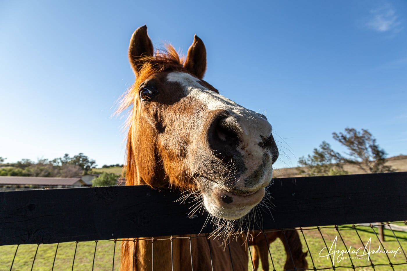 Friendly Horse