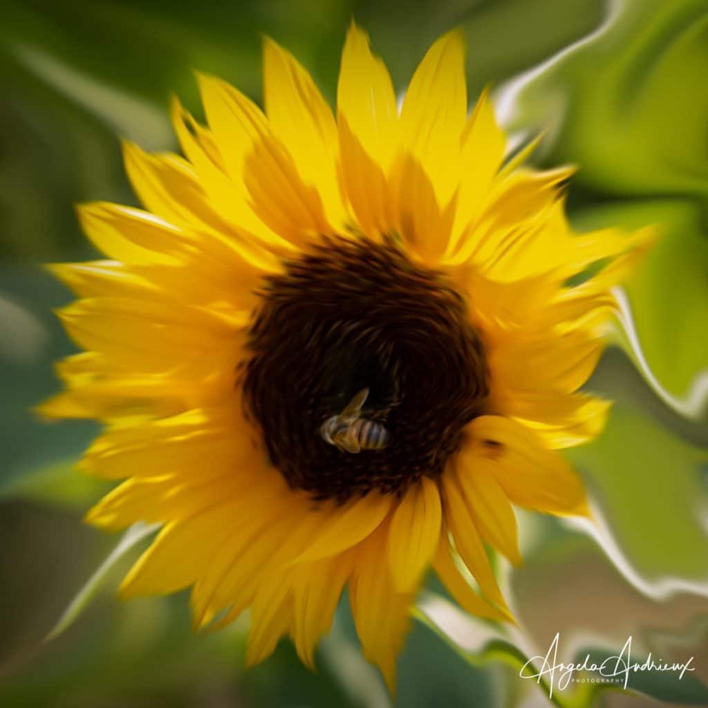 Swirly Sunflower with Bee