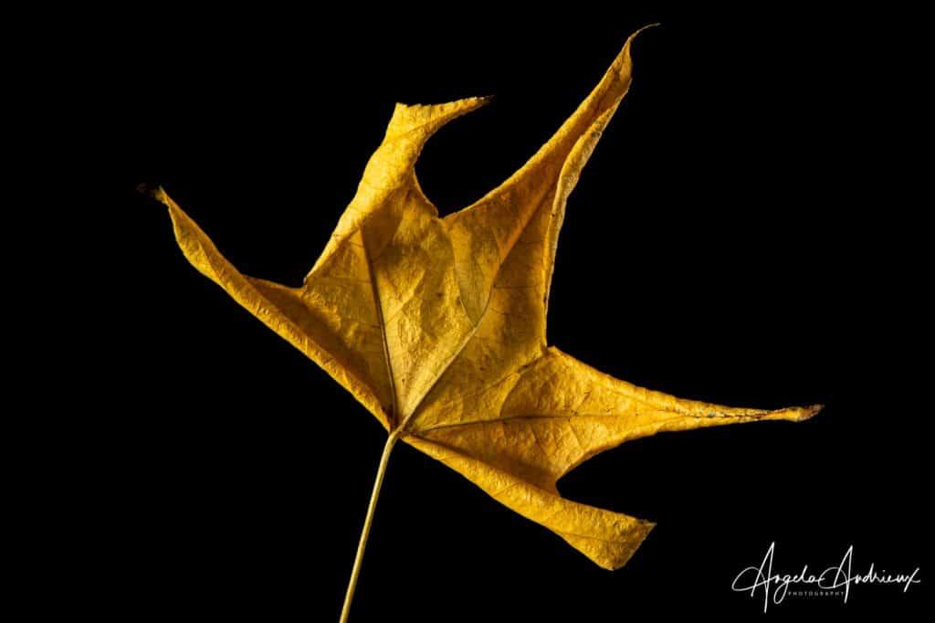 Portrait of a Yellow Fallen Autumn Leave