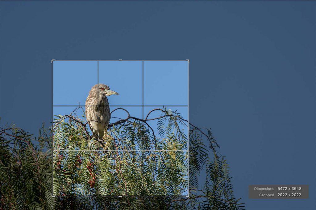 Extreme crop of bird in tree photo