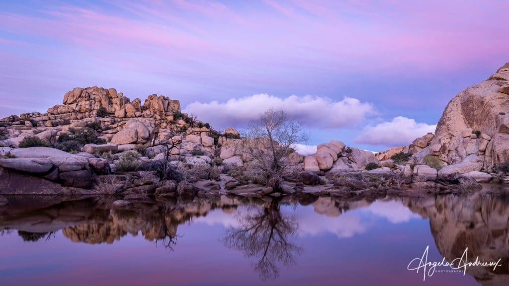 A touch of pink in Joshua Tree