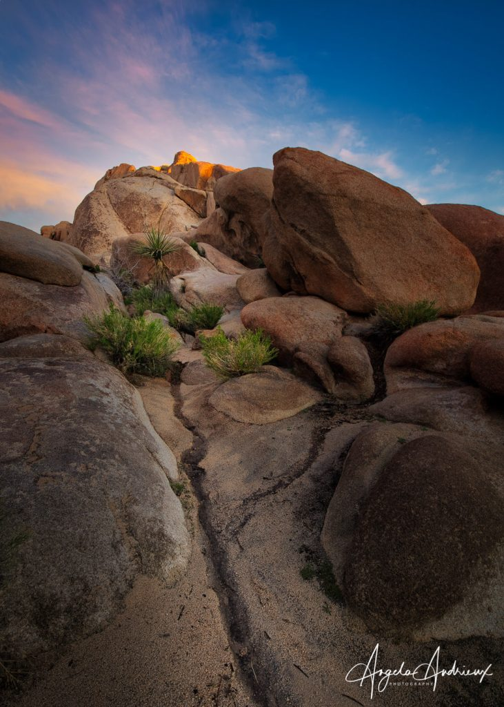 Reaching for the Light in Joshua Tree